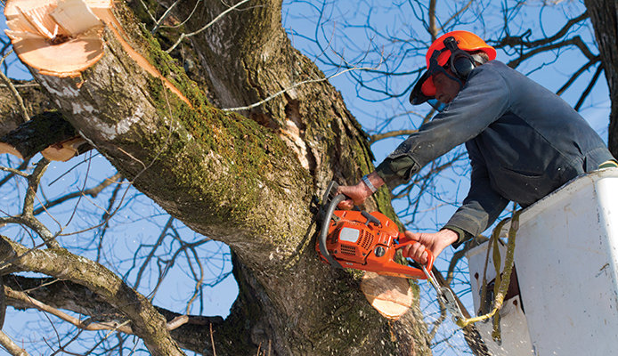 Arborists inspect your trees for dead branches that may fall.